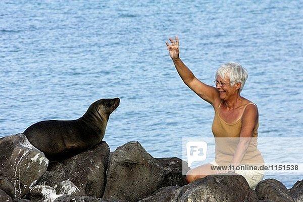 Seelöwe Tourist Galapagosinseln