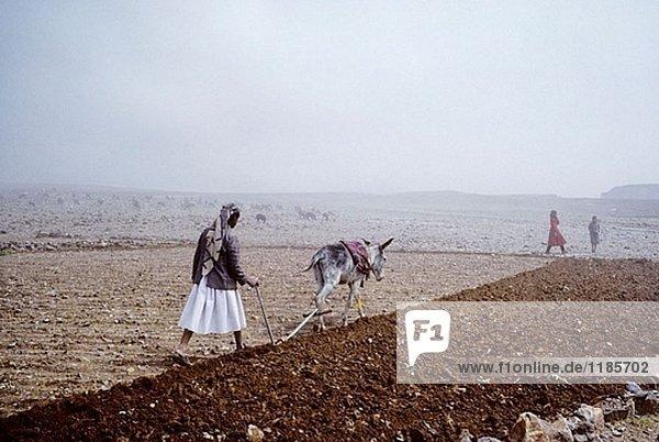 Boukour Bereich  Jemen  Arabien.