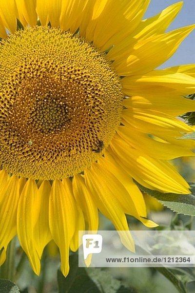 Außen,Außenaufnahme,B20-552478,Blume,Blumen