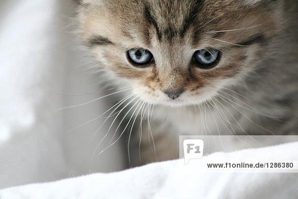 Nahaufnahme der Kätzchen auf Decke Nahaufnahme der Kätzchen auf Decke