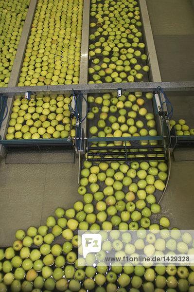 Apple-line sorter