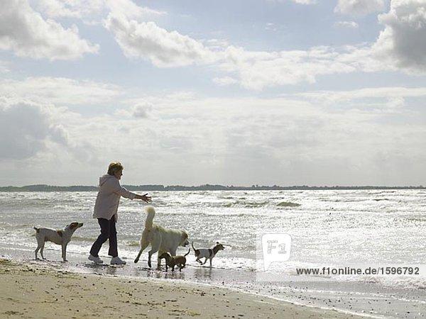 Eine Frau mit ihren vier Hunde an einem sonnigen Strand spielen.