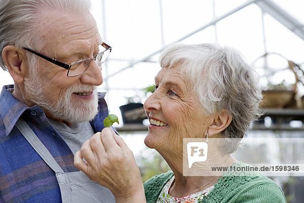 Ein älterer skandinavischen Paar mit Basilikum Schweden.