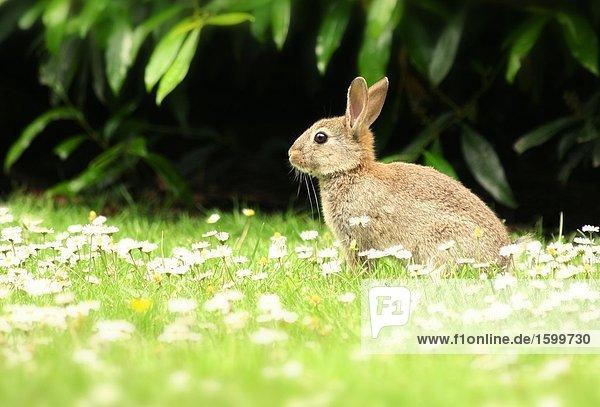Blume Feld Kaninchen