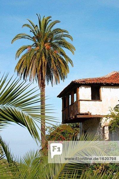 Icod de Los Vinos. Teneriffa. Kanarischen Inseln. Spanien