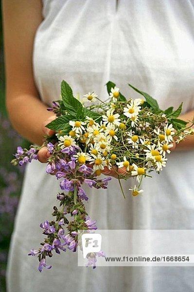 Medicinal plants: Camomile (Matricaria chamomilla)  Sage (Salvia officinalis)  Thyme (Thymus vulgaris) and Mint (Mentha sp.)