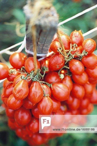 Reihe von Tomaten