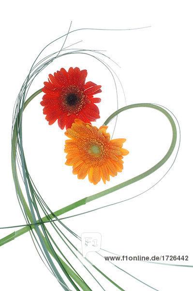 Ringelblumen Herz