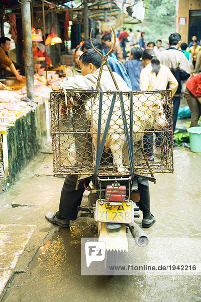 China  Guangdong province  man sitting on motor scooter in market  dog in cage on back of bike