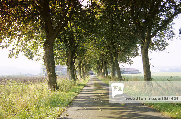 Avenue in Riemsloh  Osnabruecker country  Germany