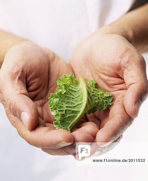 Kraut Leaf in Händen