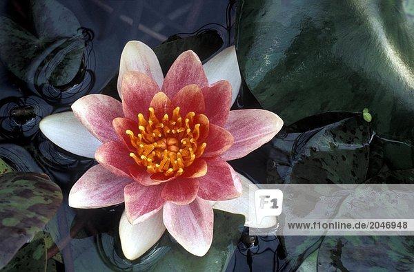 8900044401N,Blumen,Botanik,Farbe,Farben