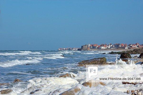 8900214501I,Beach,Europa,Fauna,Fisch