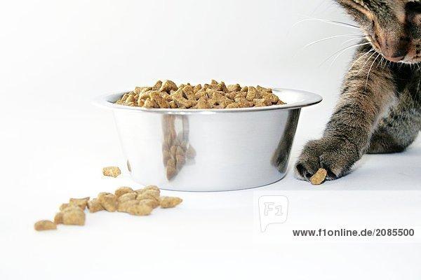 Nahaufnahme essen Cookie Katze