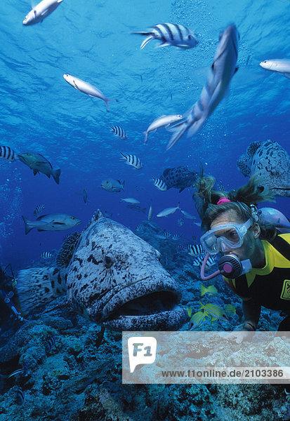 Sport & Erholung. Tauchen. Weibliche Taucher unter Wasser. Australien.