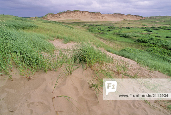 Fragile grass holds sand dunes in place  PEI Nat'l Pk