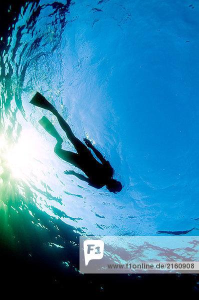 Snorkler auf Oberfläche schwimmen. Bridgetown. Barbados