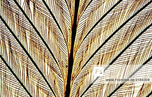 Bird feather  100 X optical microscope  photomicrography   histology