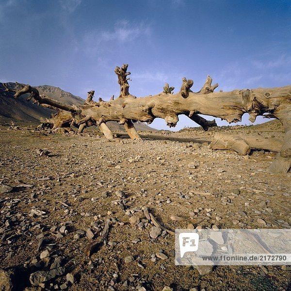 View of a death tree lieing down on a desertic and dry countryside