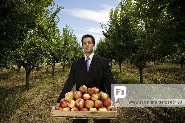 Mann mit Apfelkiste im Obstgarten.