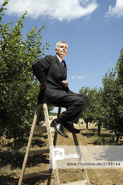 Mann sitzt auf einer Leiter im Obstgarten.