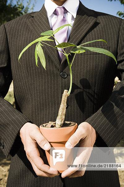 Paar Hände halten Topfpflanze.