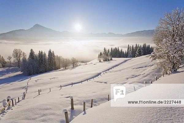 Bäume auf polar Landschaft  Kitzbuheler Horn  Kitzbühel  Tirol  Österreich Bäume auf polar Landschaft, Kitzbuheler Horn, Kitzbühel, Tirol, Österreich