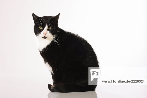 Katze - sitzend - Freisteller