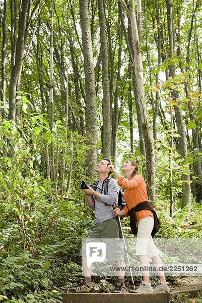 Paar Nachschlagen in Wäldern