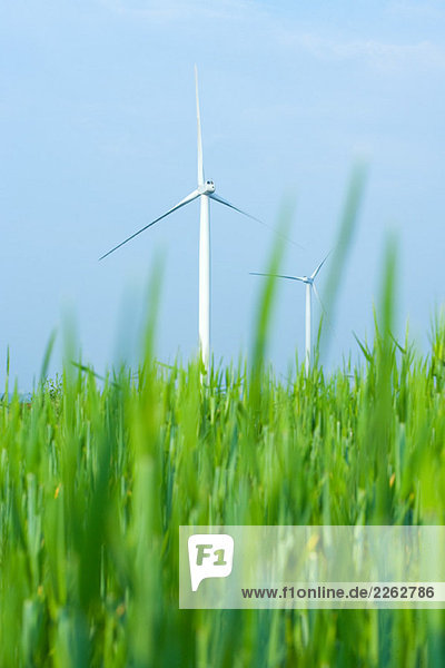 Windturbine Windrad Windräder Feld Flachwinkelansicht groß großes großer große großen Gras