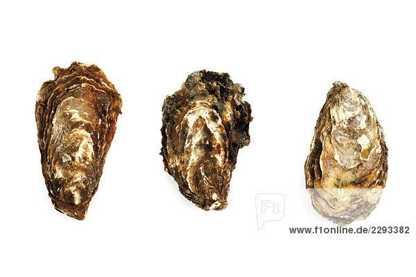 Geschlossene Austern  erhöhte Ansicht