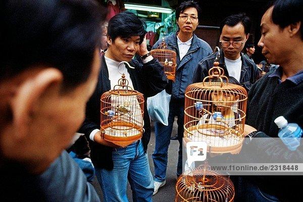 Vögel-Markt  Hong Lok Street  Kowloon-Halbinsel. Hong Kong. China
