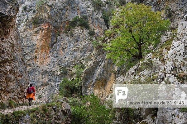 Cares Canyon. Nationalpark Picos de Europa  Provinz León  Castilla-León  Spanien