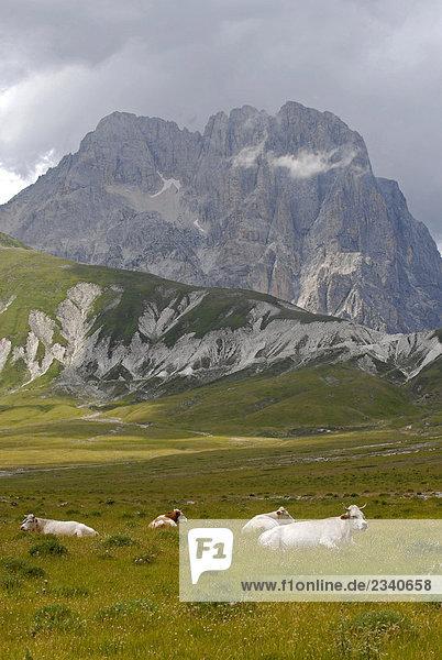 Italien  Abruzzo  Campo Imperatore plain  Gran Sasso und Monti della Laga Nationalpark  Kühe auf der Weide Italien, Abruzzo, Campo Imperatore plain, Gran Sasso und Monti della Laga Nationalpark, Kühe auf der Weide