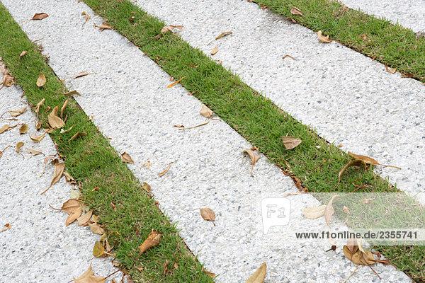 Pflastersteine gras
