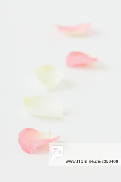 Flower petals in a row  close-up