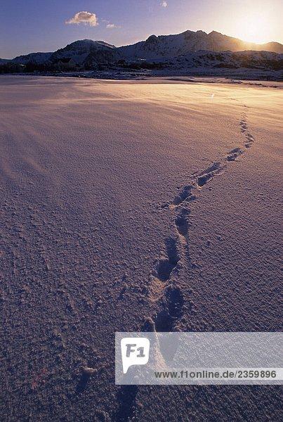 Norwegen,  Lofoten-Inseln,  Fußabdrücke auf schneebedeckten Strand