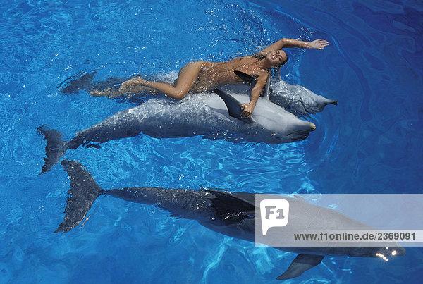 Junge Nackte Frau Spielen Mit Delphinen Im Wasser Stock Fotografie