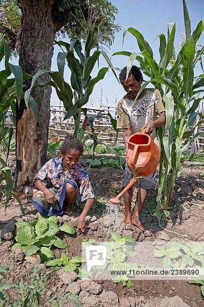 Paar pflege Gemüsegarten in Aosera Village  Oecussi-Ambeno. Ost-Timor