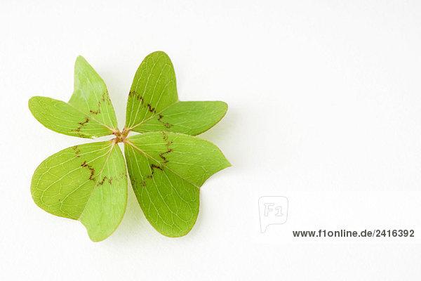 Four-leaf clover  close-up