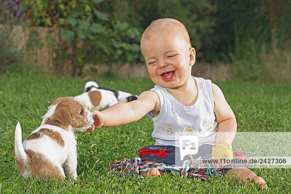 kleiner Junge mit drei Jack Russell Terrier Welpen auf Wiese