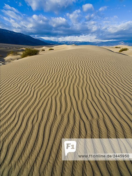 Stovepipe Wells Sand Dunes  Death Valley National Park California  USA