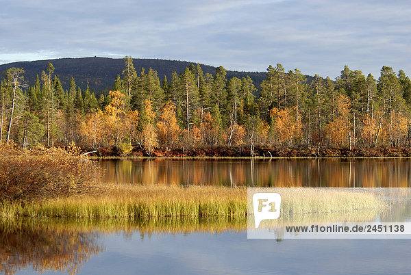 Lappland  Finnland  Lemmenjoki Nationalpark