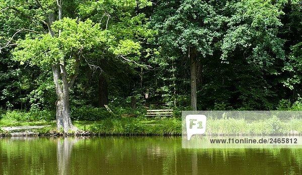 Bäume am Seeufer Bäume am Seeufer