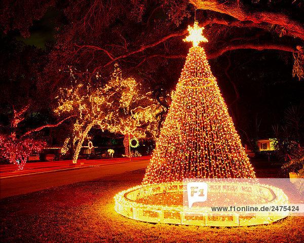 Amerikanische Weihnachtsbeleuchtung.Usa 007aca01965 Amerika Außenaufnahme Baum Botanik