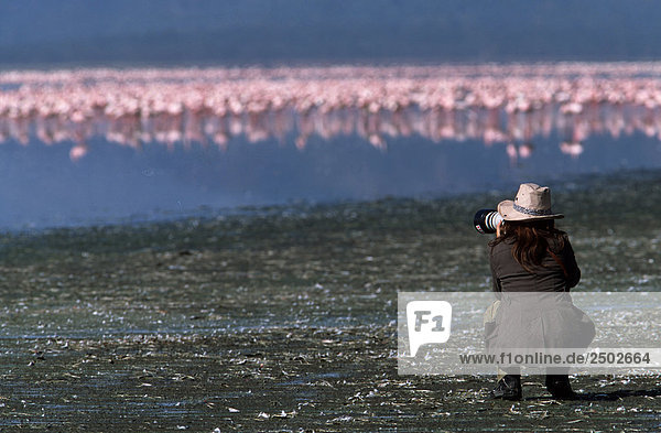 Kenia  Flamingos (Phoenicopterus Ruber) Lake Nakuru