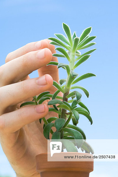 Hand touching succulent plant  close-up