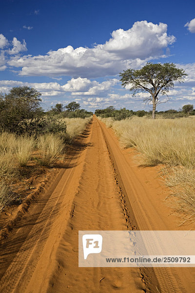 Africa  Botswana Track through Kalahari Desert