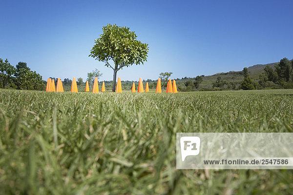 Traffic Cones um Baum im Feld