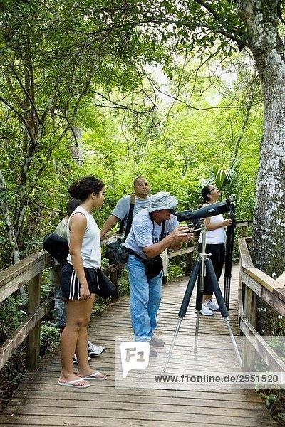 Big Cypress Bend Boardwalk  Vogelbeobachtungen im Everglades National Park  Florida